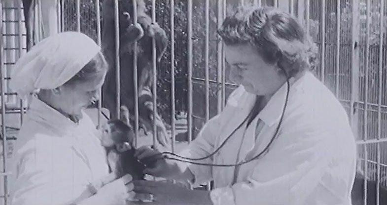 hybrid man and monkey