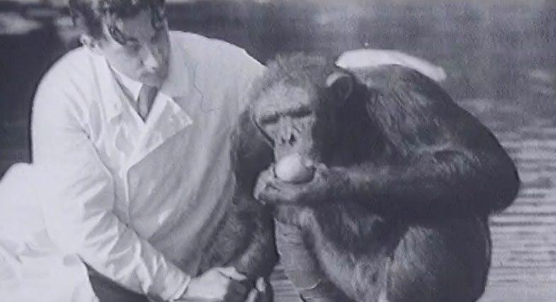 Документальный фильм секса женщины с обезьяной