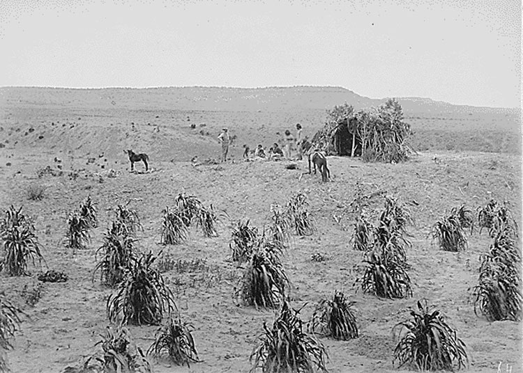 Navajo hogan and cornfield near Holbrook, Arizona