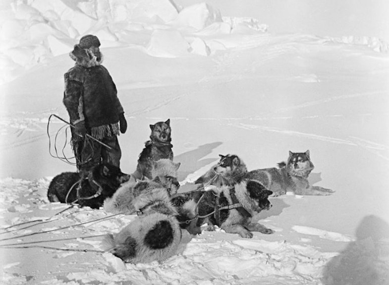 Ekspeditsiya Amundsena. Na foto Helmer Hansen i sobaki