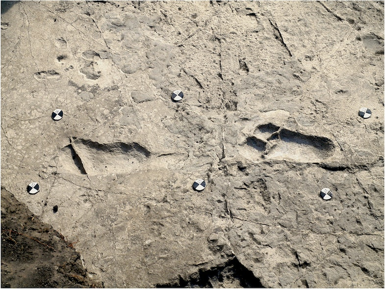Central part of the hominin trackway
