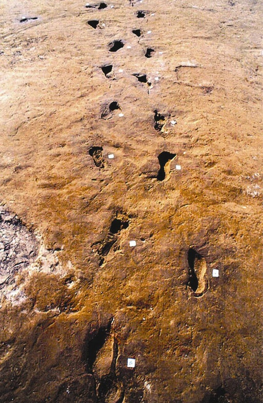 Thousands of footprints in the surge ash deposit of the Avellino eruption (3460 BP ca.-(+/-65 yrs, carbon-dated)) testify to an en masse exodus from the devastated zone