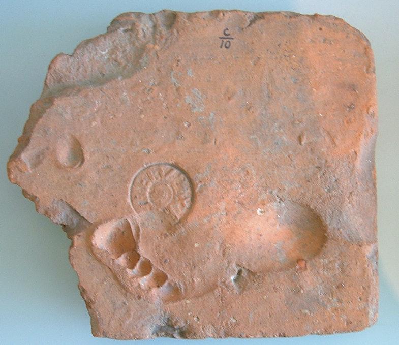 Footprint in a roman tile from the kilms of the Tenth Legion in Berg en Dal near Nijmegen