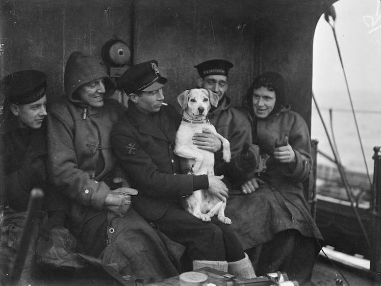 Pluto the dog, mascot of HMS COSSACK