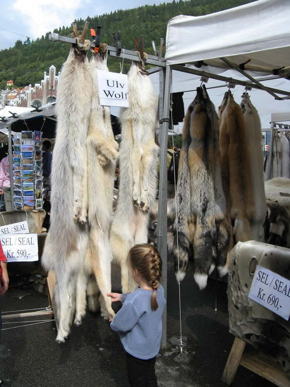 Skins wolves market of bellows in Bergen Norway
