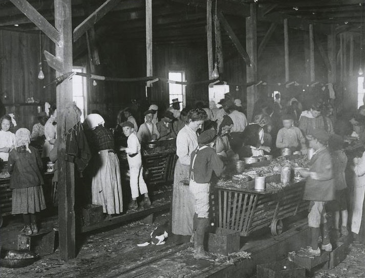 Child labor in Maryland oyster cannery