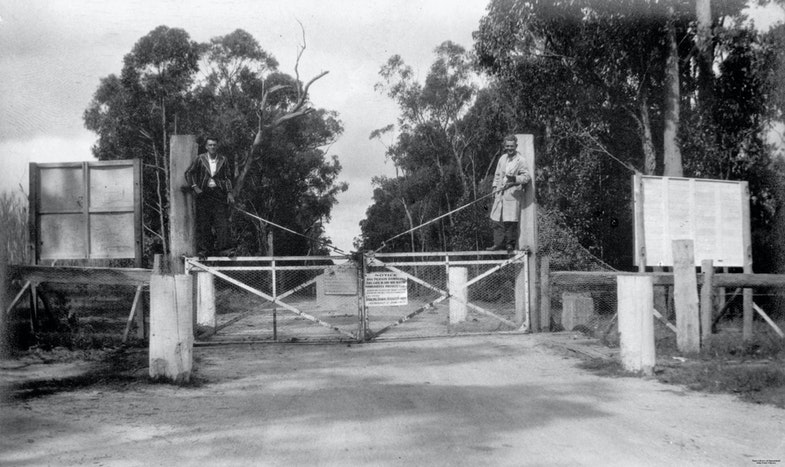 Rabbit gate at Stanthorpe, Christmas 1934