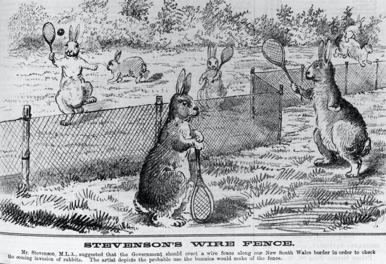 Cartoon in response to Mr Stevenson's (M.L.A.) suggestion for the erection of a rabbit fence between New South Wales and Queensland to check the invasion of rabbits
