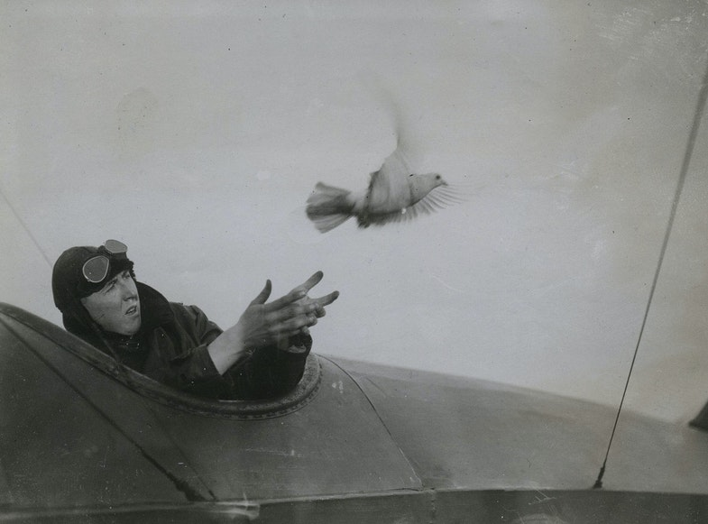 The pilot of a British seaplane which has landed on the water and is in need of help releasing a pigeon carrying a message asking for assistance. Many lives have been saved in this way by means of the naval pigeon-service