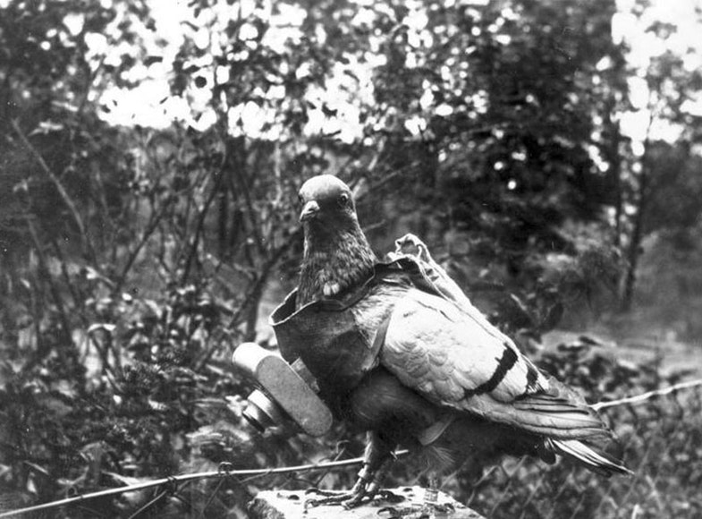 German unmanned camera pigeon probably aerial reconnaissance in World War I