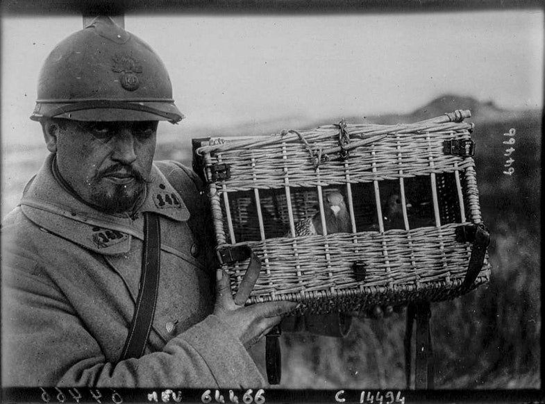 Pigeons voyageurs. Moreau, photographer in the French army