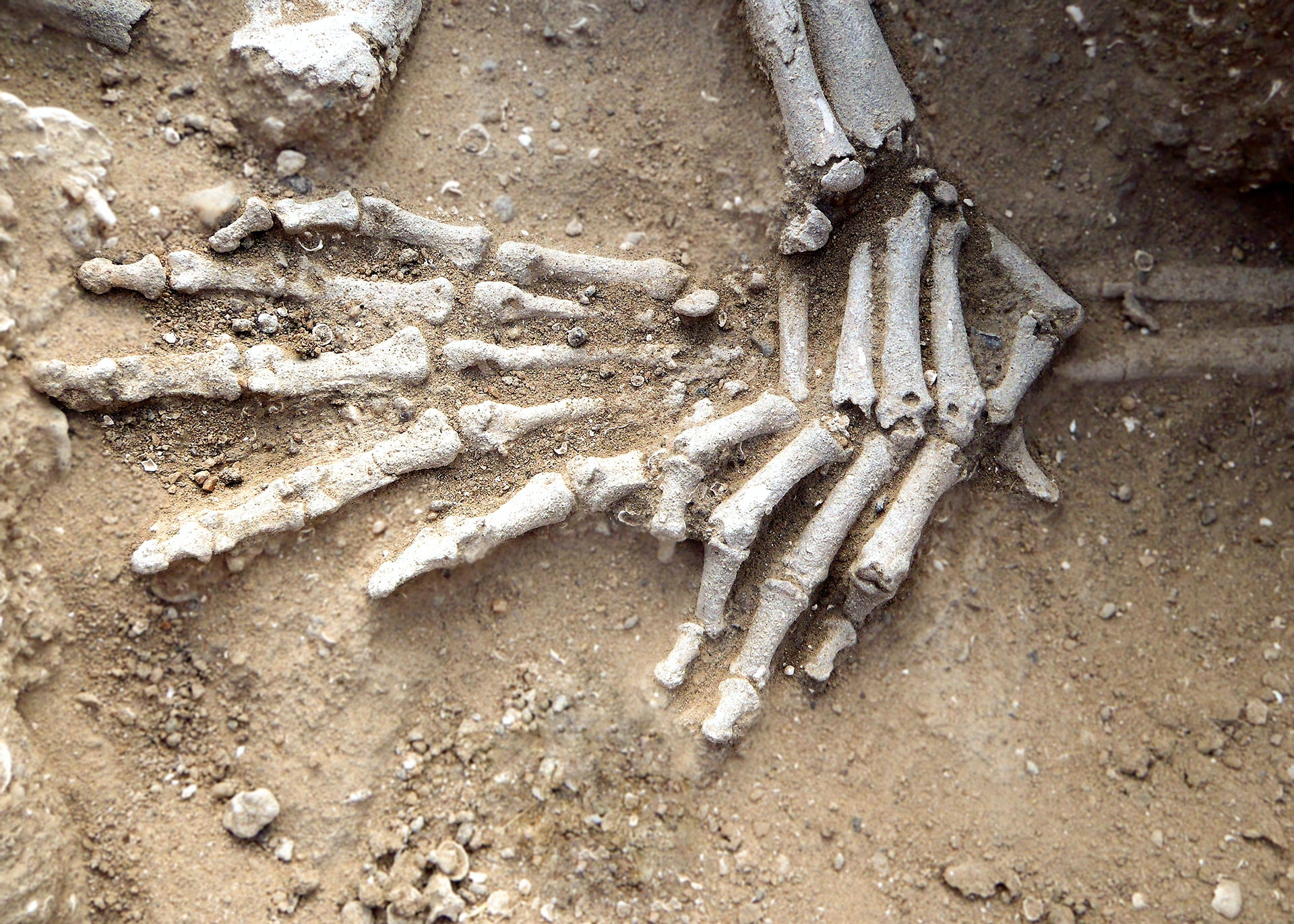 Detail of hands of in situ skeleton. Position suggests they had been bound