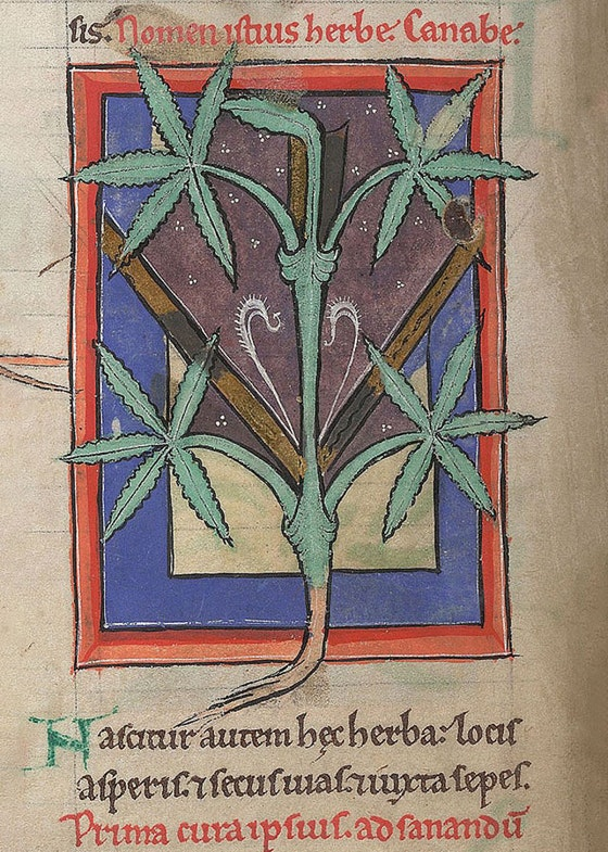 Miniatures from a 12th-century Medical and Herbal Collection